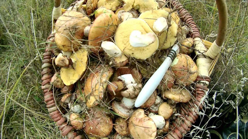 Как солить грибы на зиму в банках