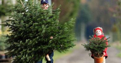 Как выбрать елку правильно на Новый год.