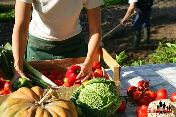 активный период сбора урожая