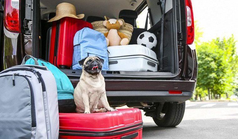 Путешествие на автомобиле - советы для начинающих, как приготовиться и что взять.