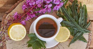 Иван-чай - как правильно собирать, сушить и заготавливать в домашних условиях.