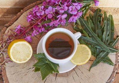 Иван-чай — как правильно собирать, сушить и заготавливать в домашних условиях.