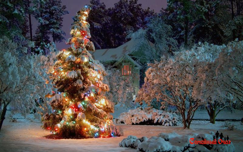 рожденственская елка