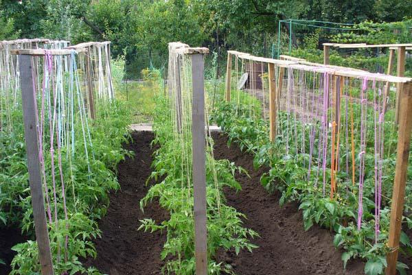 Как подвязывают помидоры
